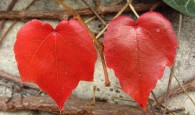 leaves-1012948_640